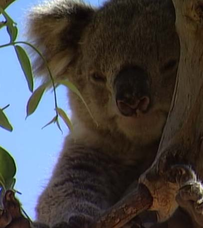 Wildest Islands of Australia - Grainger TV